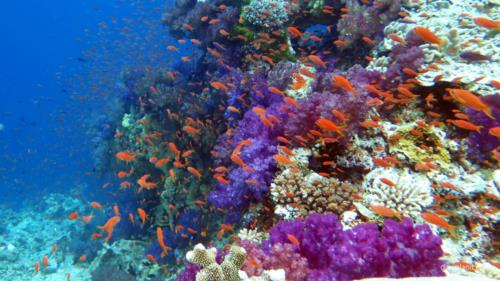 5 Stunning Dive Spots in Fiji You Should Visit Soon