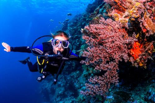The Conflict Islands, Papua New Guinea, remote AMAZING diving!