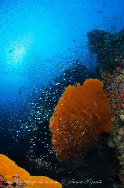 Cruising Mergui Archipelago in Myanmar