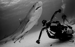 Neither Felix nor I will ever scuba-dive with sharks.