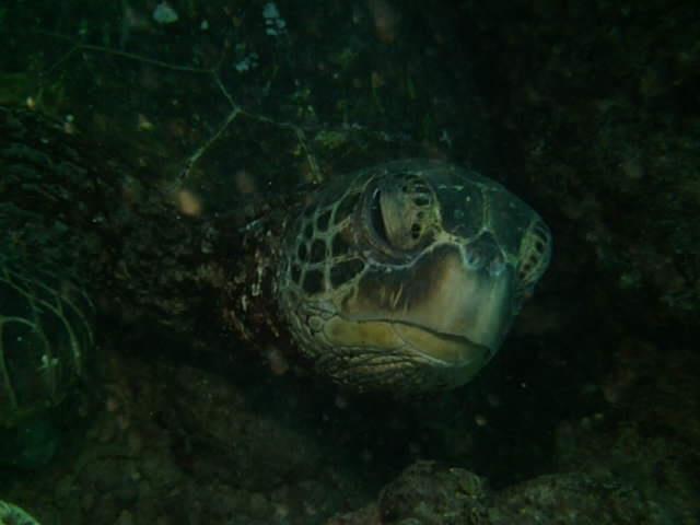 Hanauma Bay - What are you looking at?