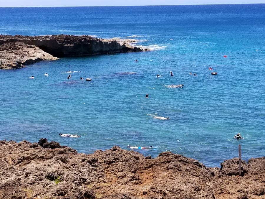 Shark's Cove - Sharks cove, oahu