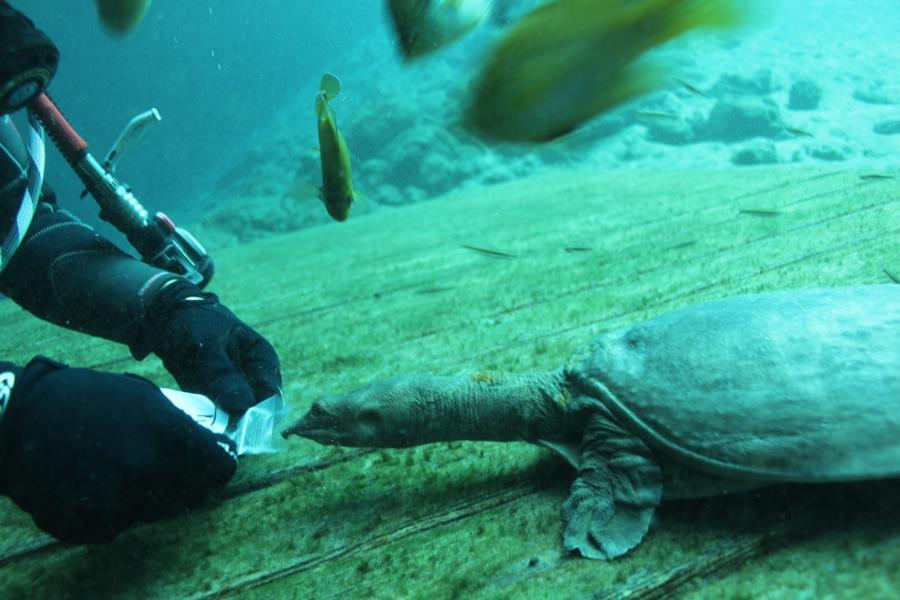 Blue Grotto Dive Resort - feeding virgil