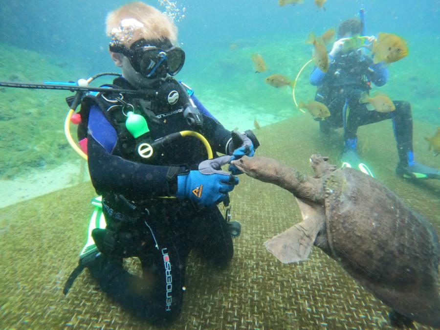 Blue Grotto Dive Resort - Meeting Virgil