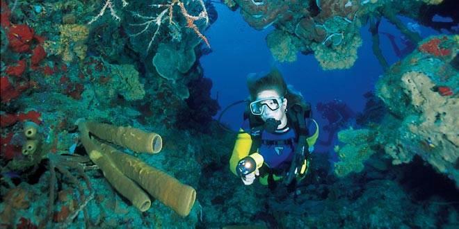 Bats Cave Reef - Bats Cave Reef