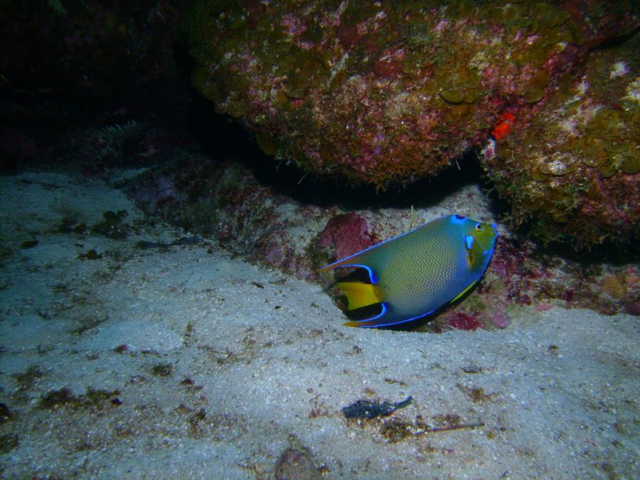 Utila - Fish