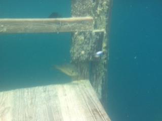 Alabama Blue Water Park (Pelham Quarry) - Dive Alabama-1