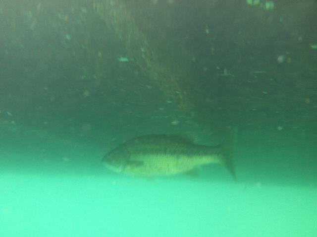 Alabama Blue Water Park (Pelham Quarry) - Dive Alabama 7