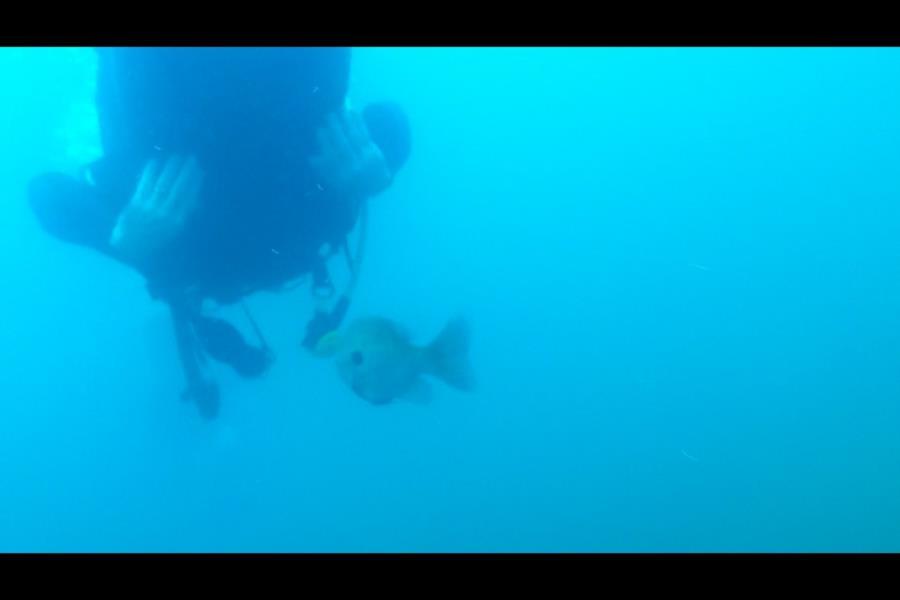 Alabama Blue Water Park (Pelham Quarry) - Fish