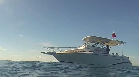 Benwood Wreck - Tri-Trox's Boat - Catching Nemo