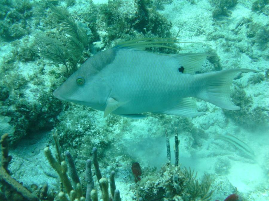 Alexander's Wreck - Fish1