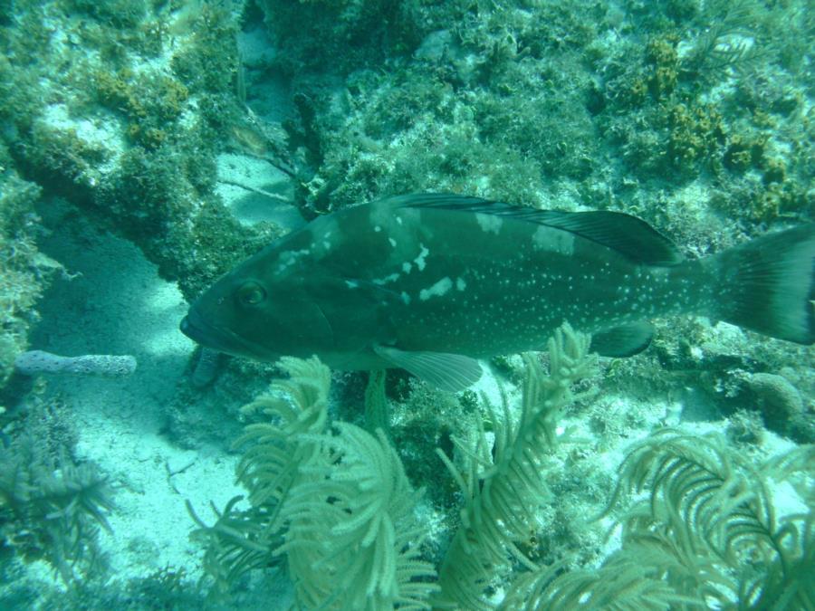 Alexander's Wreck - Fish3