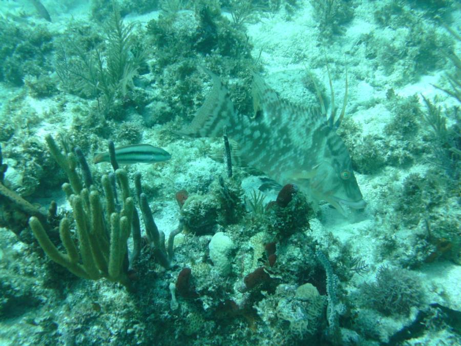 Alexander's Wreck - Fish6