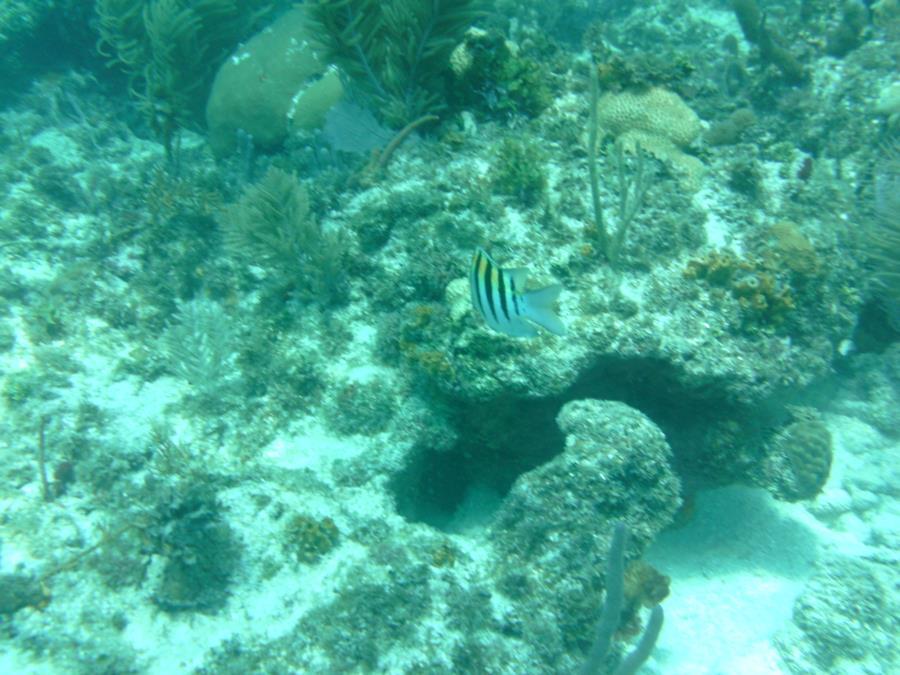 Alexander's Wreck - Fish5