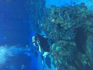 Epcot DiveQuest - Walt Disney World - Living Sea - Great time