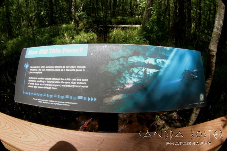 Buford Springs/Sink - Derek Covington's image on the trail board