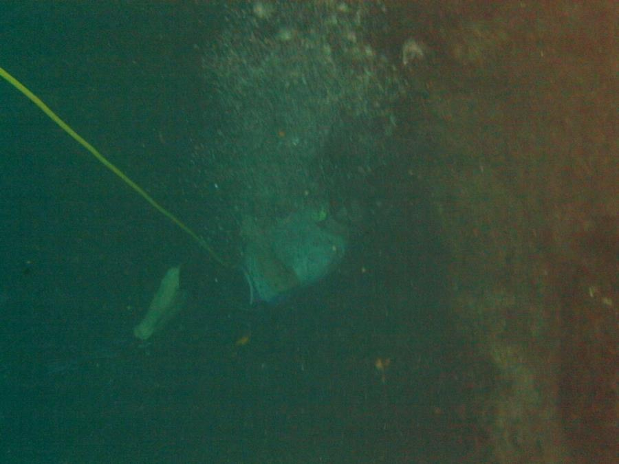 Hospital Hole, Weeki Wachee River - Steve 45 ft at hospital hole