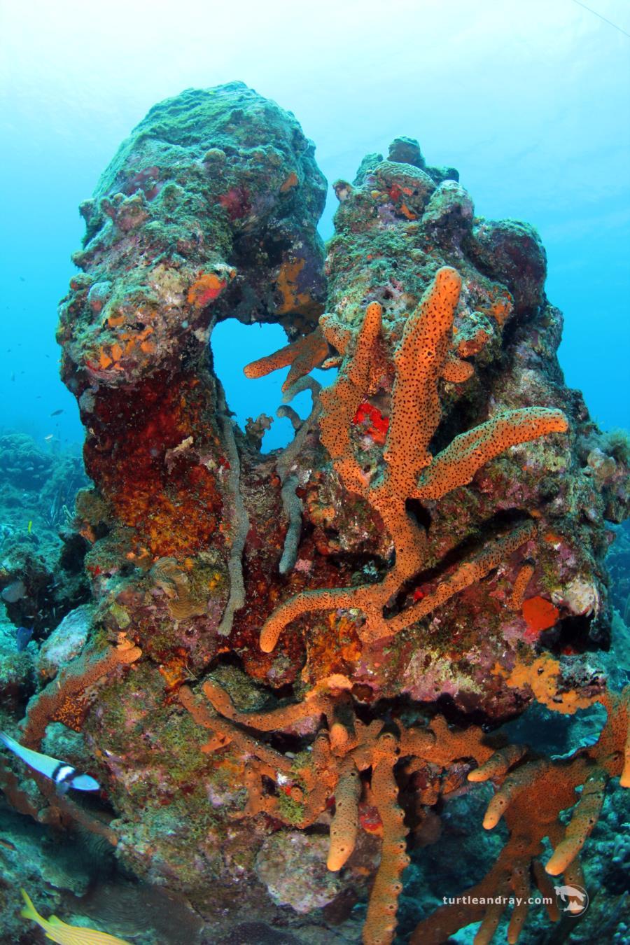 Mushroom Forest - Corals