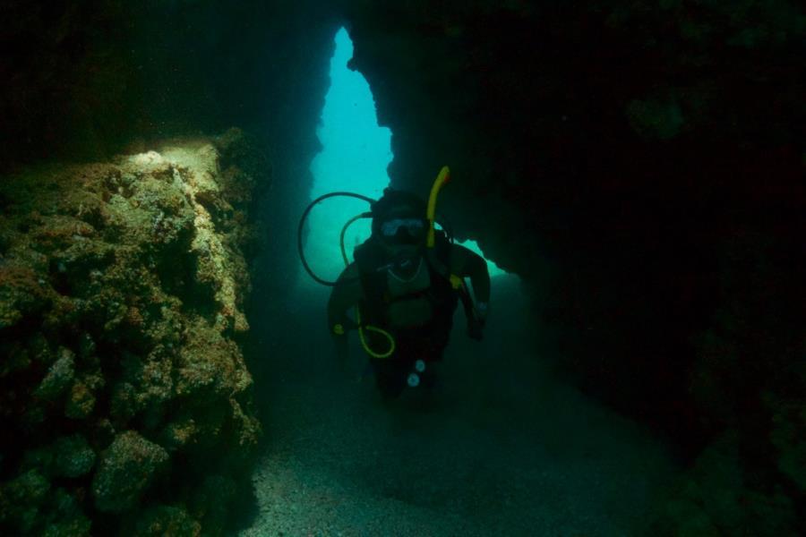 Islas Marietas - Sea life at marietas