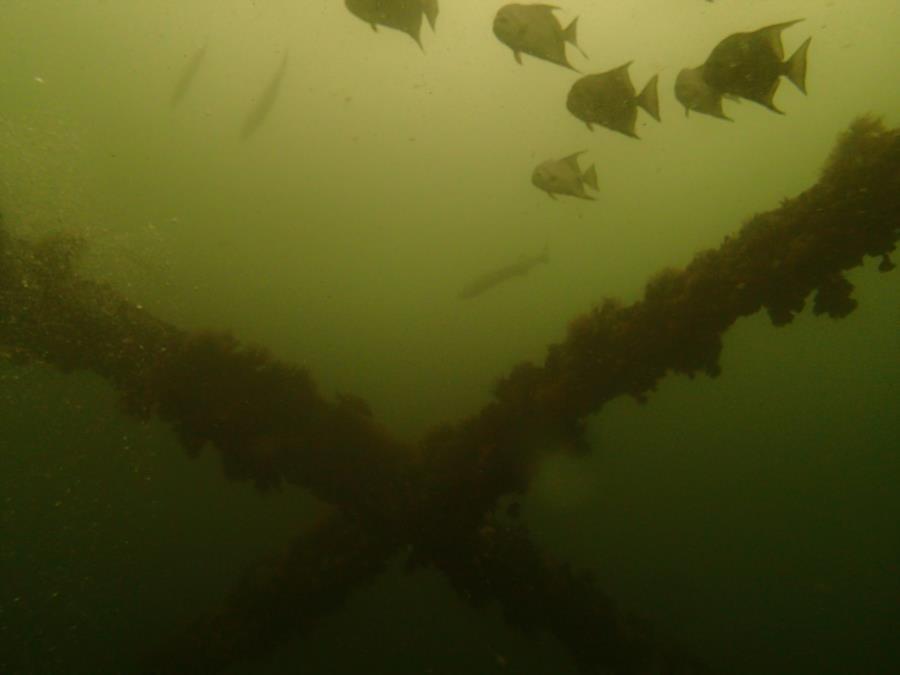 DuPont Bridge Span # 1 - Barracuda & Bat Fish