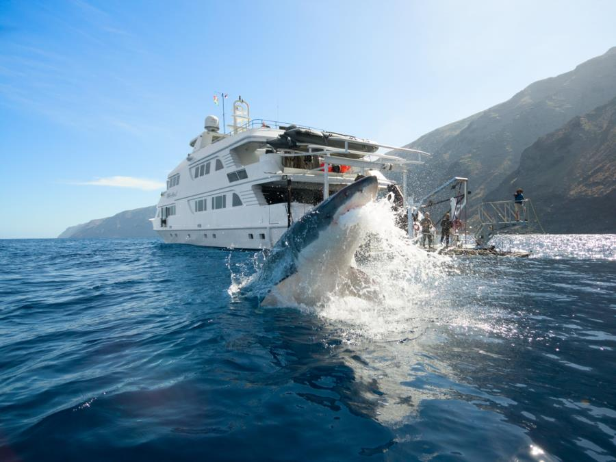 Guadalupe Island - Shark Breach