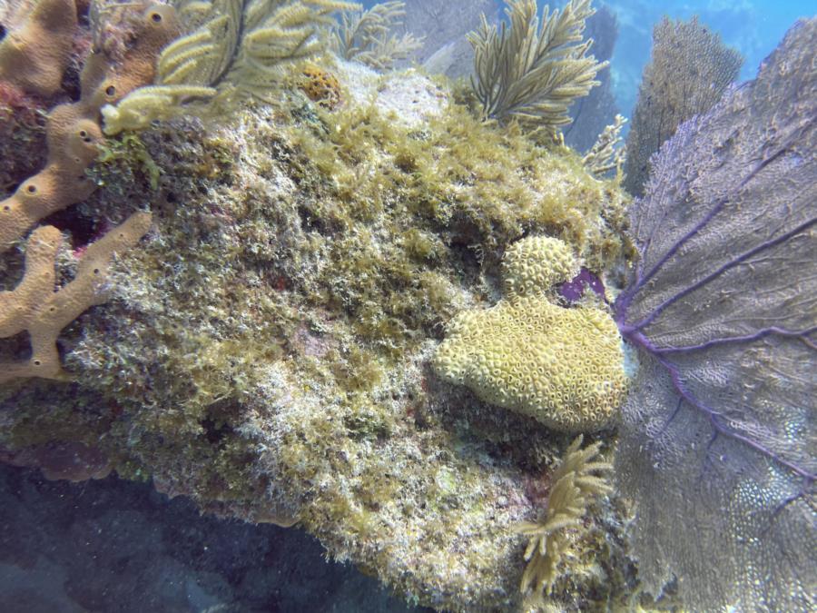 Key West - Key west sand reef