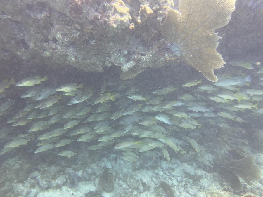 Key West - Reef