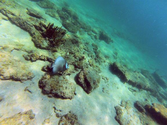 Inside Reef aka Lauderdale-by-the-Sea - CR_G0250080_WEB.jpg