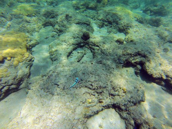 Inside Reef aka Lauderdale-by-the-Sea - CR_G0120040_WEB.jpg