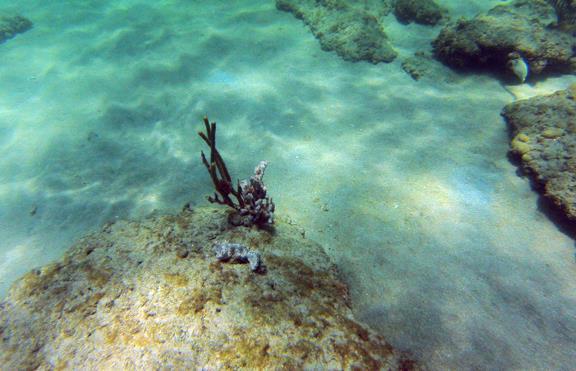 Inside Reef aka Lauderdale-by-the-Sea - CR_G0140045_WEB.jpg