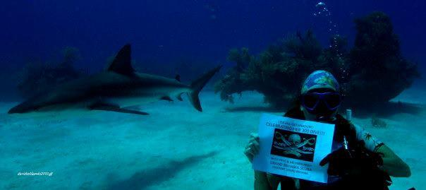 Shark Junction - did my 300th and 400th dive here