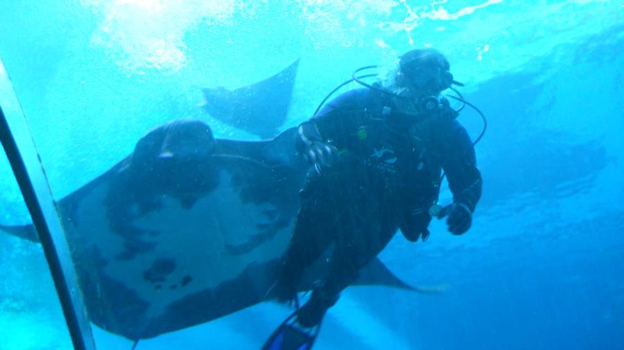 Georgia Aquarium Ocean Voyager Dive - Ga Aqu3