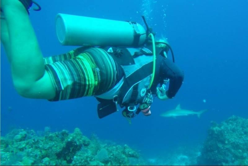 Shark Hotel, Providenciales, TCI - Reef Shark