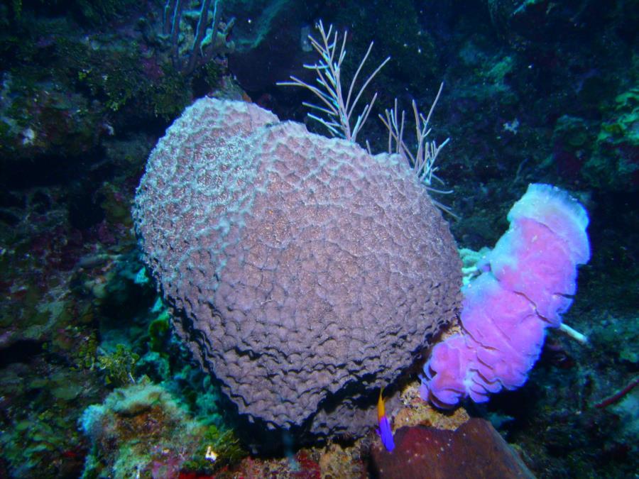 Roatan - Sponges