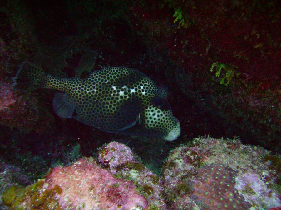 Roatan - Fish
