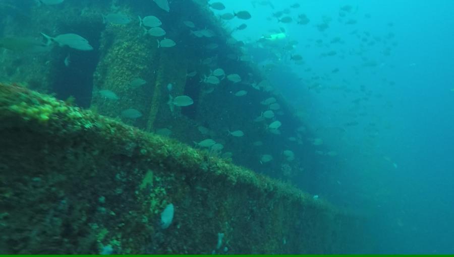Red Sea Tug - Red Sea
