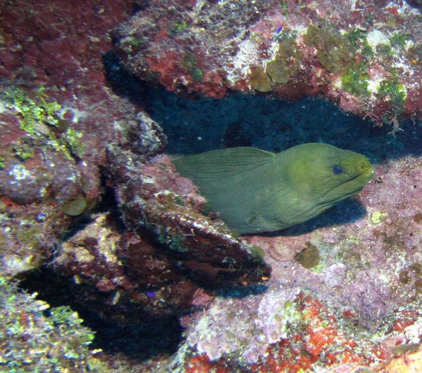 Deep Eel Garden, aka Deep Moray - Deep Eel Garden 5-12-10
