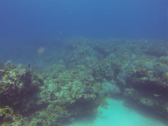 Mahahual Mexico - Mahahual Mexico Barrier Reef
