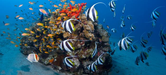 Aqaba - aqaba Aquarium