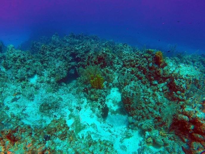 Angel Reef - Angel Reef