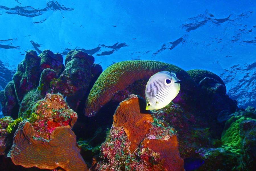 Butterfly Reef - Butterfly Reef
