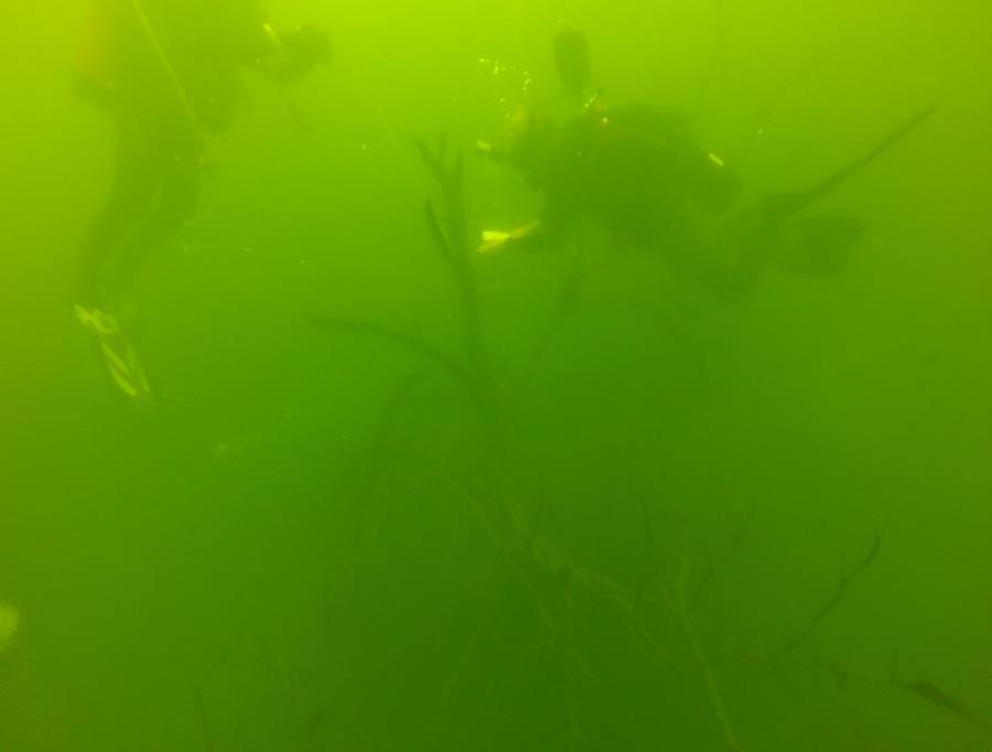 Wheeler Branch Lake - attaching buoy to Tree