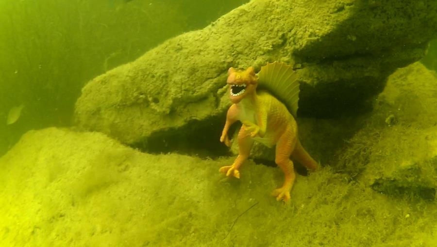 Wheeler Branch Lake - Dino