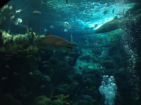 Florida Aquarium: Dive with Sharks - Florida Aquarium, Tampa