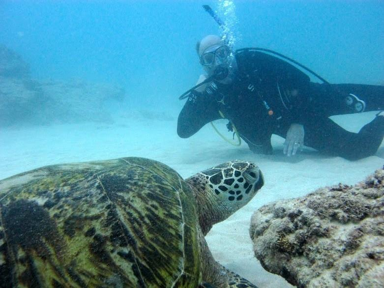 Manta Haven - DIVING WITH TURTLES
