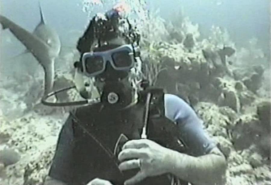 Shark Wall - bjrambler