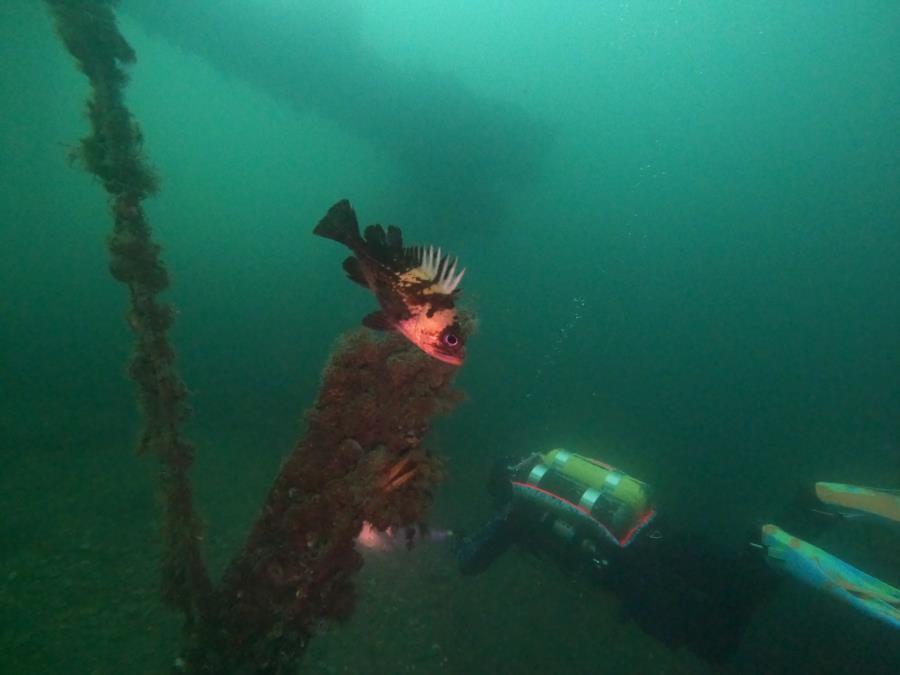 Fox Island - fish