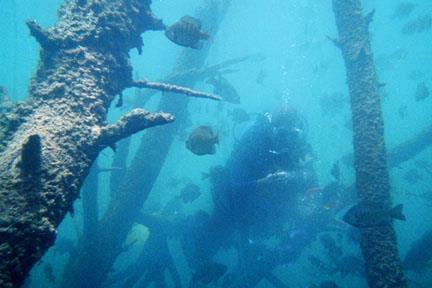 Cuyuna Iron Mines - Underwater trees of Cuyuna