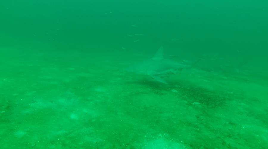 Hathaway Bridge Span #14 - Sandbar Shark...
