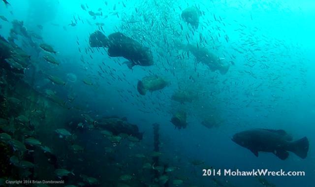 USS Mohawk CGC Veterans Memorial Reef - Our Mohawk Dive 8-23-2014